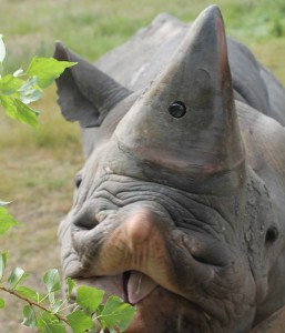 rhino-hidden-camera