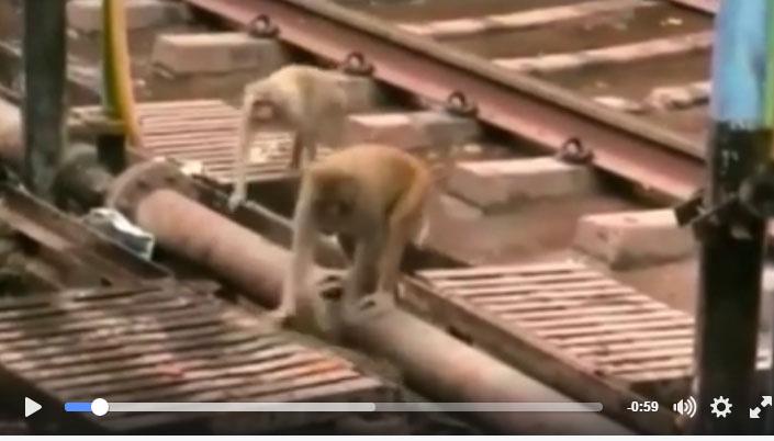 monkeyvideo